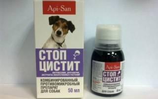 Стоп цистит для собак состав