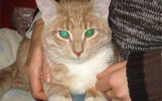 Почему у кошек возникает цистит