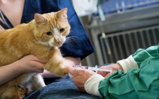 Обезболивающие для кошки при цистите