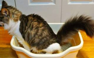 Препарат для профилактики цистита у кошек
