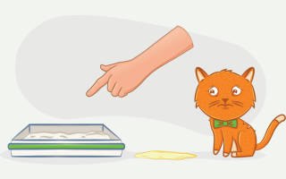 Недержание мочи при цистите у кота
