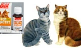 Стоп цистит для кошек как принимать при цистите