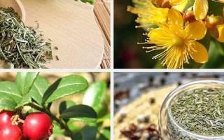 Травяные сборы при циститах и уретритах