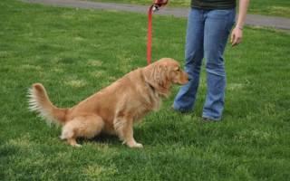 Может ли у собаки быть цистит от сухого корма