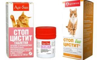 Лечение цистита у кошек нитроксолином
