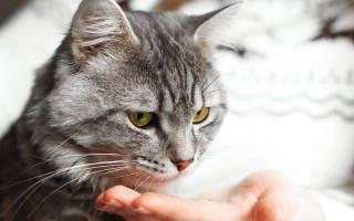 От чего может быть цистит у кошки в домашних условиях