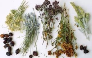 Травяной сбор от хронического цистита