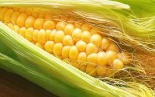 Кукурузные рыльца при лечении цистита