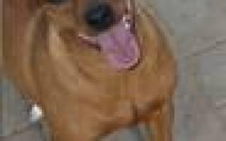 Показатели мочи при цистите у собаки