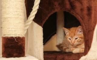 Стоп стресс для кошек при цистите