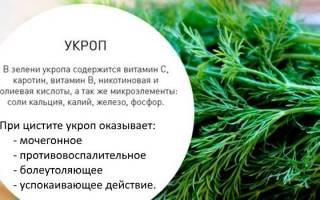 Лечение цистита семенами укропа отзывы