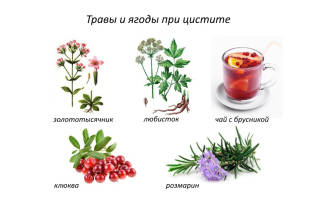 Лечение острого цистита у женщин травами