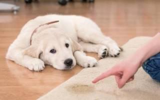 Можно ли собаке при цистите давать фурадонин