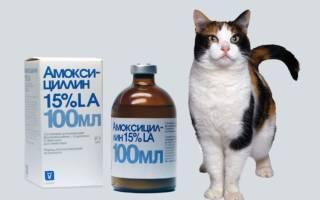 Лечение цистита у кошек амоксициллин