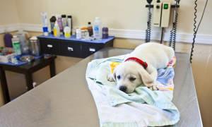 Диета при лечении цистита у собак