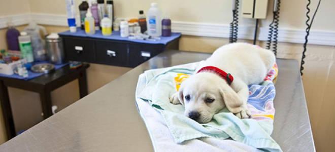 У собаки цистит что делать чем лечить