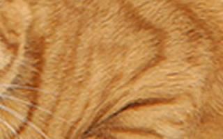 Антибиотики при цистите у котов лечение в домашних условиях