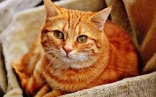 Лечебные корма для котов при цистите