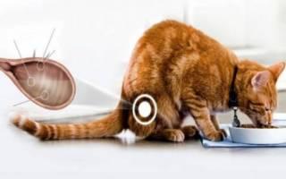 Признаки цистита у кошки в домашних условиях