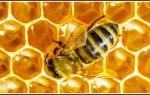 Цистит и прополис и мед