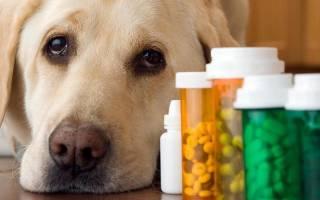 Геморрагический цистит у собаки лечение в домашних условиях