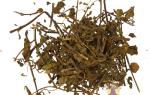 Почечный чай отзывы при цистите