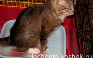 Лечение цистита у котов уколами