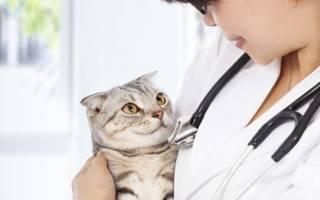 Передается ли цистит от кошки к кошке