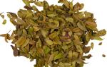 Толокнянки листья при цистите отзывы