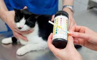 Цистит на нервной почве у кошек
