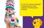 Народные средства лечение цистита у собак