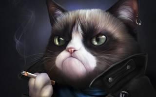 Можно ли от кошки заразиться циститом