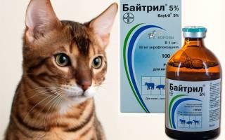 Лечение цистита у кошек байтрил